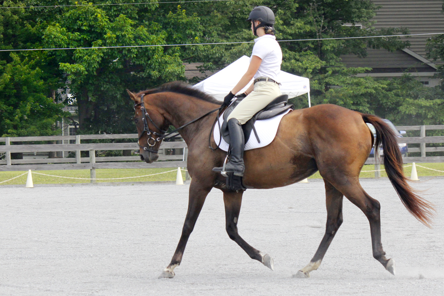 PVDA Schooling Dressage Show July 2017