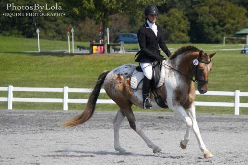 PBL-Horz-Equestrain11