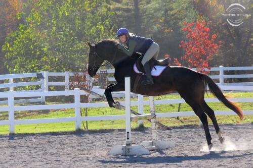 PBL-Horz-Equestrian12