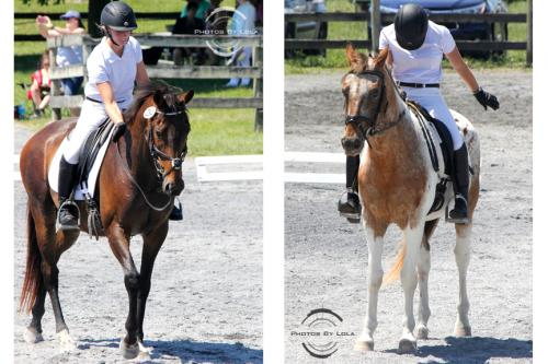 PBL-Vert-Equestrian18