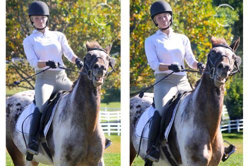 PBL-Vert-Equestrian24